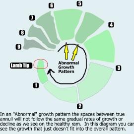 abnormalgrowth