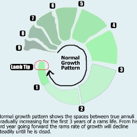 normalgrowth
