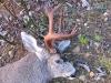 buck5