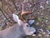 buck6