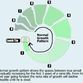 normalgrowth