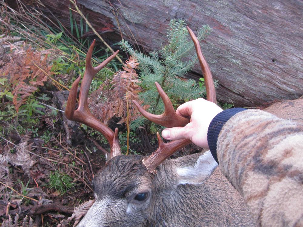 Best Deer Hunting Vancouver Island